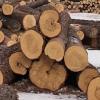 Оборудование для распилки леса