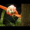 Видео как снять сцыпление с бензопилы