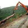 Время для заготовки леса.