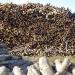 Новые технологии обработки древесины