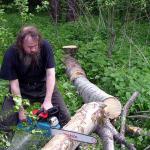 Валка леса цена