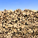Как открыть деревообрабатывающее производство?