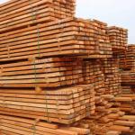 Учебник по деревообработке