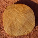 Плотность пород дерева