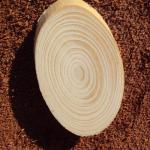 Какая порода дерева устойчиво к растрескиванию?