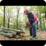 Валка леса бензопилой видео