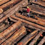 Новые технологии деревообработки