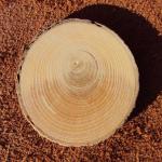 Структура древесины фото