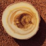 Плотность древесины