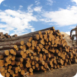 Учебник деревообработка