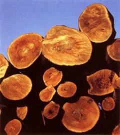 Спрос на ценную породу древесины