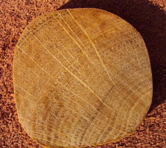 Плотность натуральной древесины